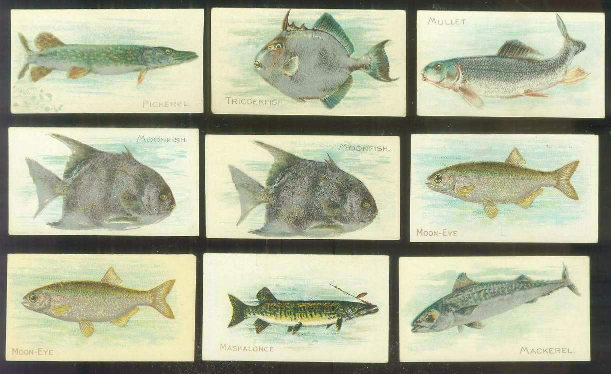 1910 sweet caporal pm fish series moonfish sc 50 for Opah fish price
