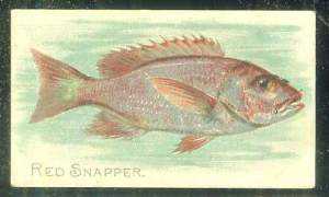 1910 T58 Fish Series (Sweet Caporal/Piedmont)  Baseball card front
